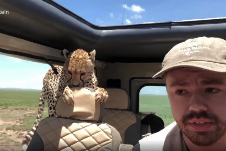 http://6abc.com/pets-animals/cheetah-jumps-into-mans-jeep/3277385/